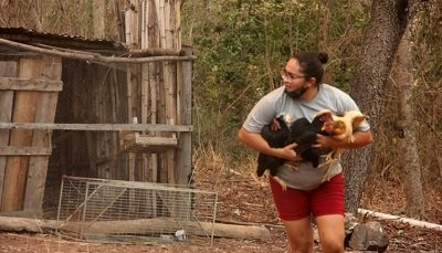 Mulher correu e conseguiu salvar as galinhas. Imagem: Silvio de Andrade